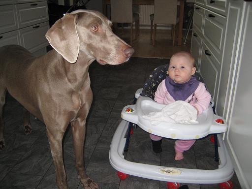 Stor hund liten flicka