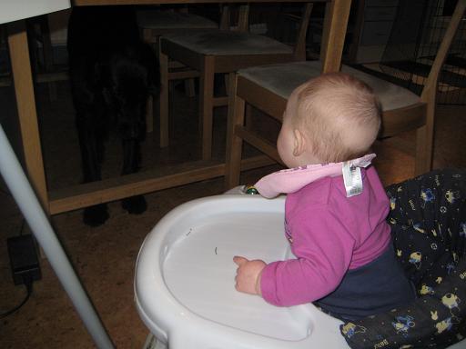 Den Svarte är rädd för hennes snabba framfart och söker skydd under köksbordet. Elise står så nära hon kommer och psykar honom med gälla tjut!
